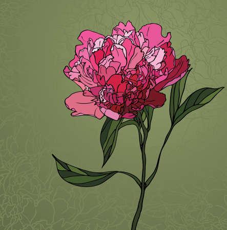 florale: Bunte Glasfenster mit Blumenmotiv, eine Pfingstrose auf grünem Hintergrund Illustration