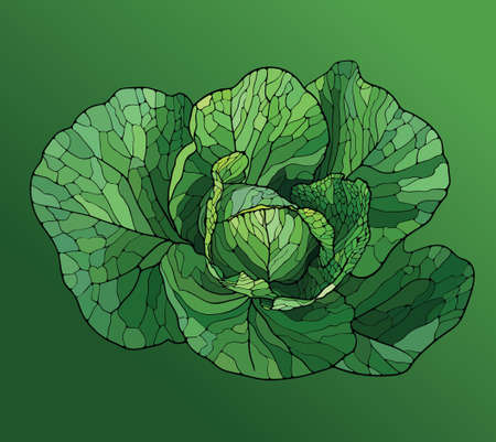 Cabbage painted in the style of the mosaic on a green background Vector