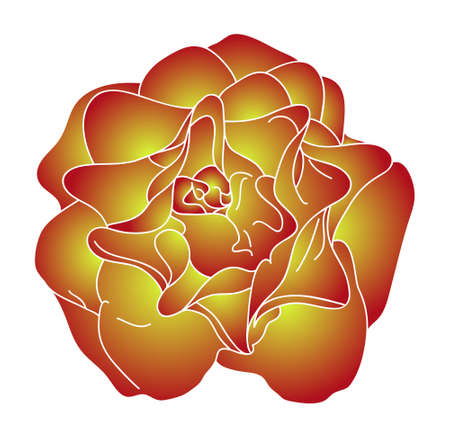 two color roses in yellow and red colors isolated on white background Vector