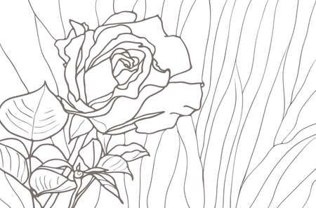 Rose isolated on white background, striped drawing Vector