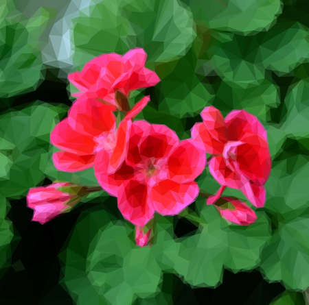 fragility: Pelargonium red flowers on a background of green leaves. Polygonal Illustration