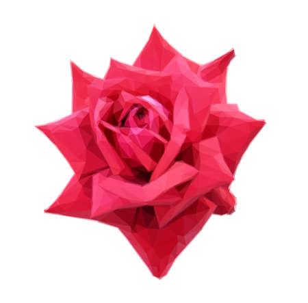 rosebud: Big rosebud red rose isolated on white background. Polygonal Illustration Illustration