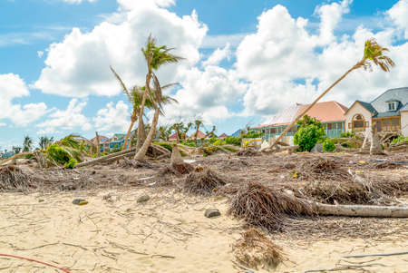 Hurricane Irma aftermath destruction to some of st.maarten/stmartin beaches blowing down trees and uprooting some on the beach.