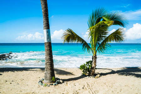 Scenic view of palm trees on a beach.