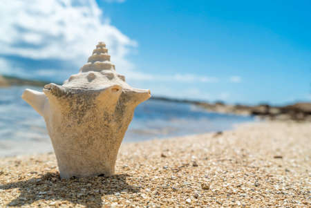 Seashell laying on sandy rocky beach 免版税图像 - 152072707
