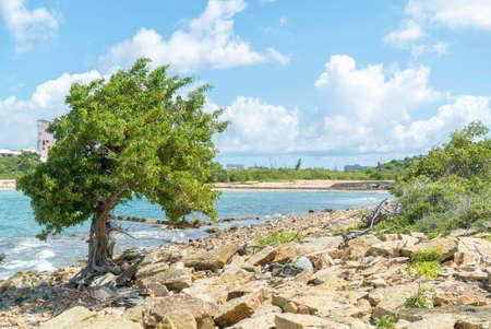 Single tree standing alone on rocky terrain next to caribbean sea.