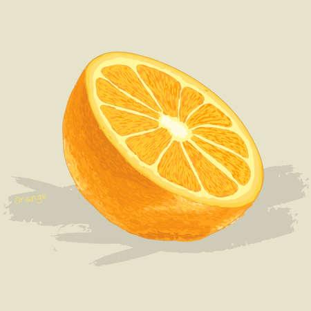 fruit clipart: Hand drawn fresh orange