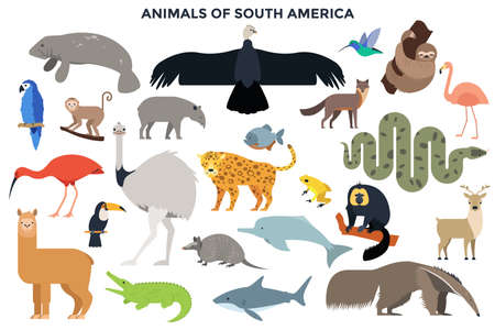Collection of wild jungle and forest animals, birds, marine mammals, fish of South America. Bundle of cute cartoon characters isolated on white background. Colorful vector illustration in flat style. Ilustracja