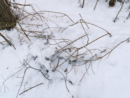 schnee und eis und winterliche texturen und hintergründe Stock Photo