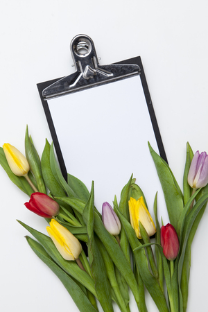 many fresh tulips on white background Stock Photo