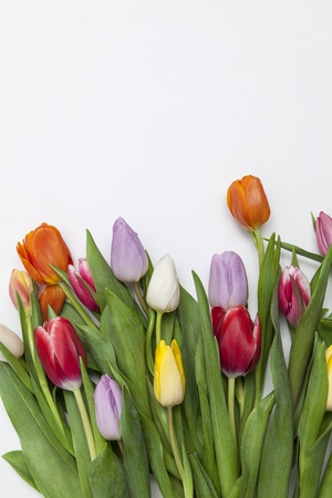 Sommer: many fresh tulips on white background Stock Photo