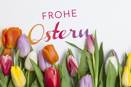 many fresh tulips on white background Stock Photo