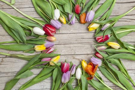 title emotions: Frische bunte Tulpen vor einem Holzhintergrund