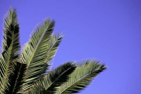 Palm leaves against a blue sky photo