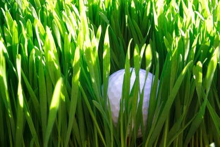 are hidden: Golf ball hidden in the rough grass, top view