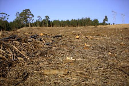 Ontbossing scène, wat overblijft na de bomen zijn gekapt (ondiepe DOF, gericht op het midden grond) Stockfoto