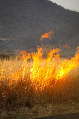 Grass burning in a wild bushfire outdoors