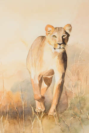 lioness: Original watercolour, Lioness on the prowl.