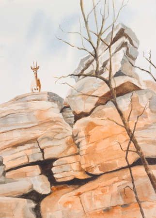 Original watercolour, Klipspringer looking over a cliff face.
