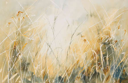 grass close up: Original watercolour, Long grass in a meadow. Stock Photo