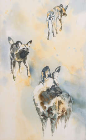 watchful: Original watercolour, collection of wild dogs lycaon pictus