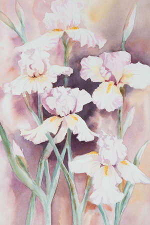 watercolour: Original watercolour, white irises. Stock Photo