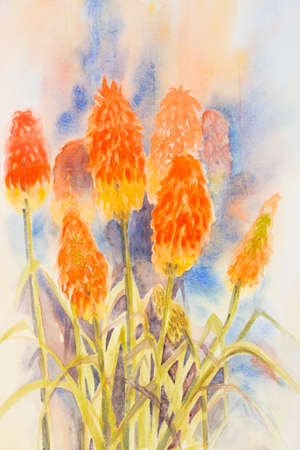 Original watercolour, red hot pokers. Kniphofia