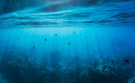 Onderwater Stockfoto