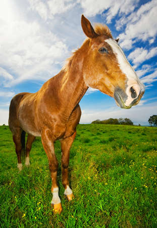 Horse in Green Field photo