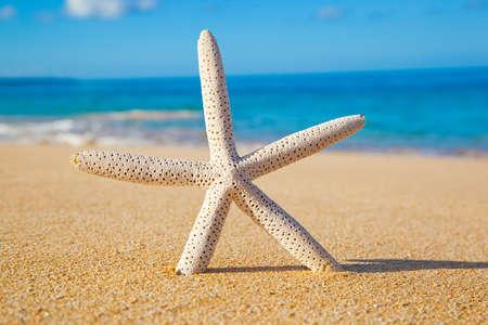 fish star: Star Fish on the Beach
