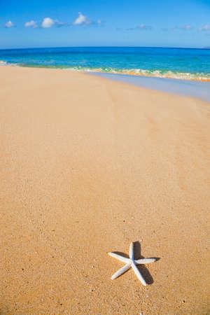 Starfish, Shell on the Beach photo