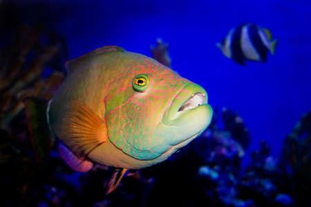 Tropical Reef Fish Underwater