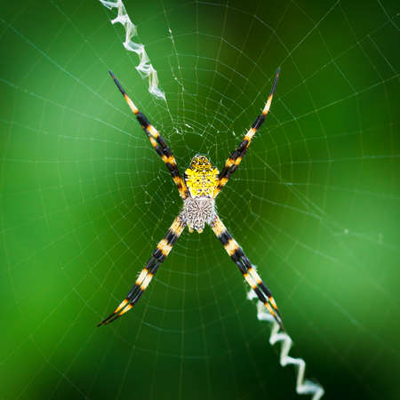 arachnophobia: Black and Yellow Spider Stock Photo