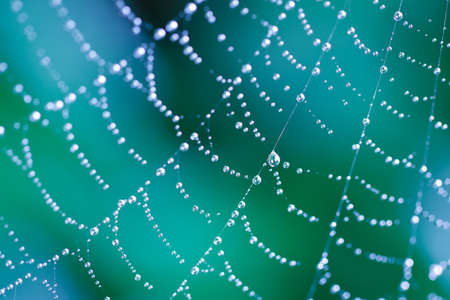 Spider Web, Beautiful Abstract Pattern Shallow Depth of Field Stock Photo - 11956618