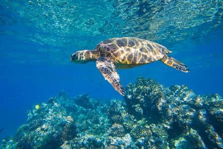 海洋海で泳いでいる緑のウミガメ