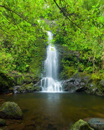 Beautiful Lush Waterfall in Hawaii photo