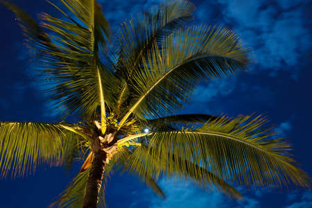 Tropical Night Sky, Palm Trees and Moon photo