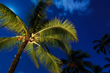 Tropical Night Sky, Palm Trees and Moon Stock Photo - 12000783
