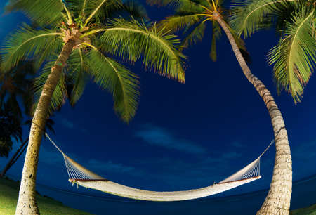 Tropical Night, Palm Trees and Hammock photo