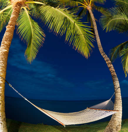 palm: Tropical Night, Palm Trees and Hammock Stock Photo