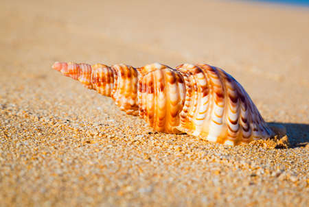 Shell on Exotic Beach photo