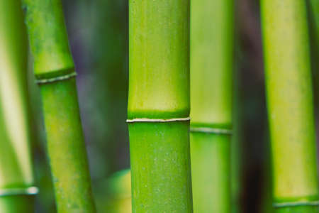Abstract Zen Bamboo photo
