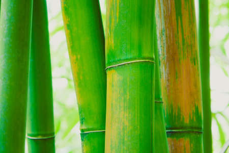 Abstract Zen Bamboo Background  photo