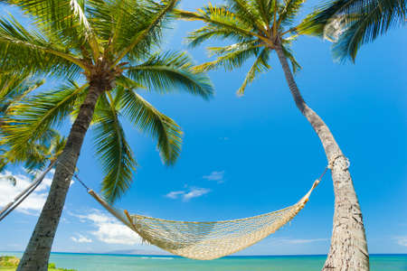 Tropical Palm Trees and Hammock Stock Photo - 12066572