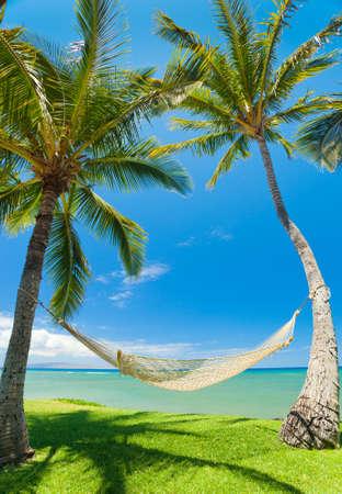 bora: Tropical Palm Trees and Hammock