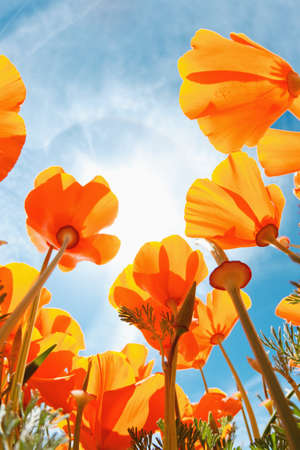 Spring Flowers, Macro View Looking up towards Sky Imagens