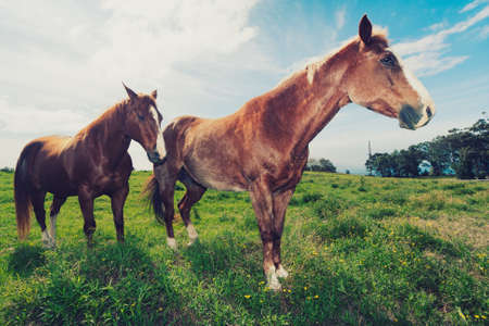 Horses in Field Stock Photo - 12420862
