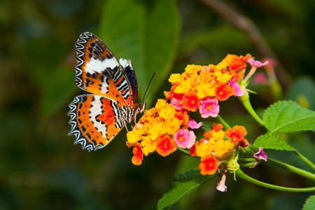 colorful butterfly: Beautiful Butterfly on Colorful Flower