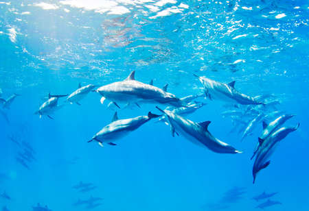 dolphins: dolphins swimming underwater, tropical ocean