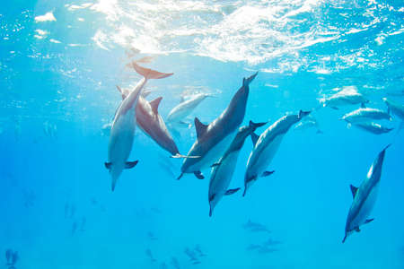 dolphins swimming underwater, tropical ocean Stock Photo - 13299678